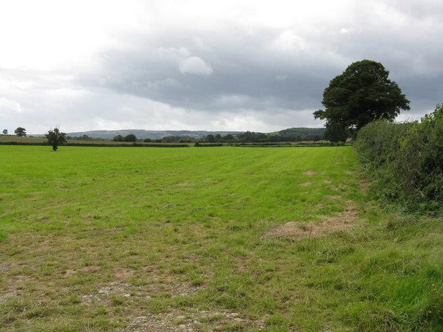 Field near Bowley Lane