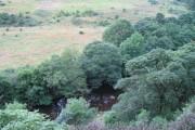 River Derwent from Bog Wood