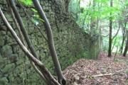 Wall in the woods