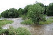 Flooded Tees