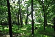Woodland within Gosforth Park