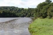 River Dart at Sharpham Point