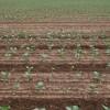 Chesterhill and crop, Boarhills