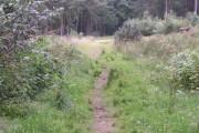 Pitcaple Wood