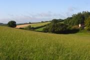 Farmland, Lacey Green