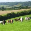 Farmland, Loosley Row