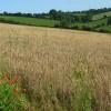 Farmland, Saunderton