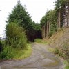 Forestry track: Cwmarad, Newcastle Emlyn