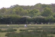 Lower Kites Wood.