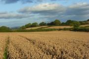 Farmland, Newton Tracey