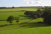 Pastures, Newton Tracey