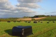 Silage bales, Newton Tracey