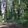 Killerton woods