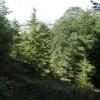 Woods west of Killerton