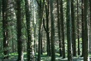 Whitelands Wood