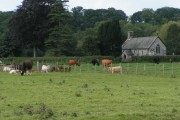 Nether Exe church and cows