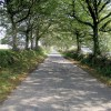 Tree lined road to East Anstey Common