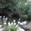 Bridge at Brundon