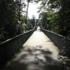 Westbourne: on the bridge