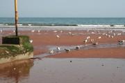 Seagulls on Preston Beach