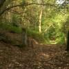 Footpath through Halldale Wood