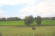 Farmland alongside the railway line between Llandudno Junction and Colwyn Bay