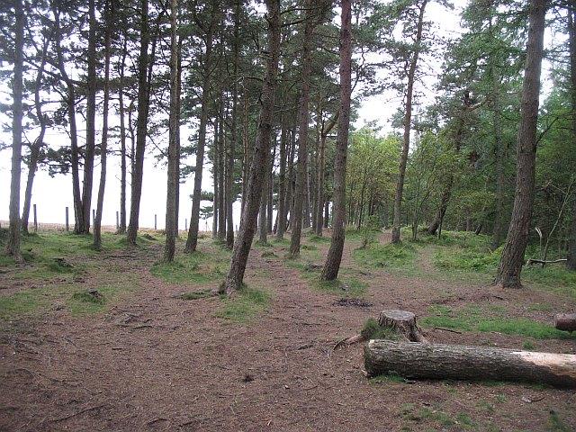 Bonaly Woods