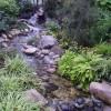 Terrapins in David Welch Winter Gardens