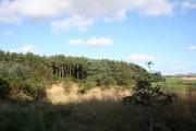 Pitcaple Woodland