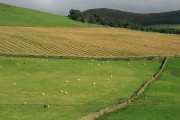 Farmland at Hallyne