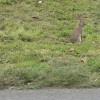 Axminster: bunny on the verge