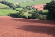Red Soil, Green Grass