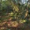 Woodland above Rockside