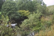 Woodland by the River Dart