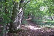 Barton Stacey - Woodland