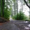 Track in St Gwynno Forest
