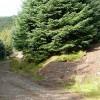 In Mynydd Gethin forest