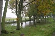 Flooded Woodland - Thorpe Lane