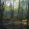 Woodland above Rockside (2)