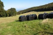 Farmland by Gopa Wood