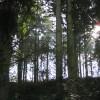 Sunlight in Gwatkin's Grove