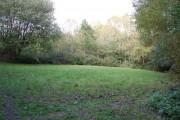 Undeveloped Woodland Area