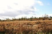 Flattened Oats at Muttonbrae