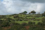 Mary Tavy: fields near Horndon