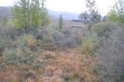 Return of woodland