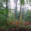St Gwynno Forest