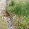Forest drainage