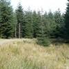 Mynydd Merthyr forest