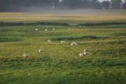 Farmland near Welsh Frankton