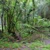 Woodland at Whitechapel Moors